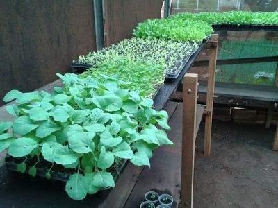 Horta comunitária produz alimentos para beneficiar famílias
