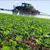Produtores rurais precisam procurar Agrodefesa para identificar propriedade