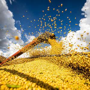 Governo de Goiás e entidades realizam a abertura da colheita da soja no Estado